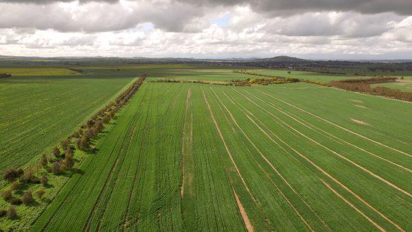 Aerial view of Boorowa Farm