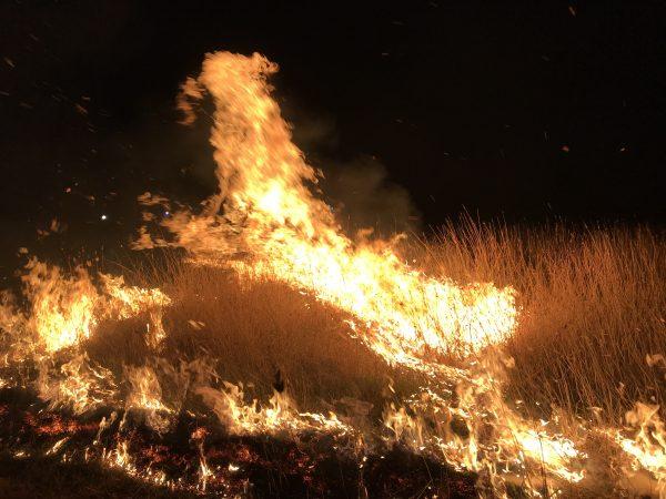 Fire burning trees across Australian landscape at night